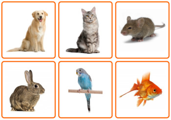 """Photo Picture Cards *54 ANIMALS* 3 Formats 3.5x3.7"""""""
