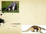 Animals ABCs Real or Fantasy