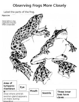 Animals - AMSTI Interactive Notebook