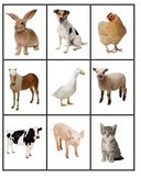 Animals Activity File