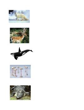 Animals Adaptations Activity #2