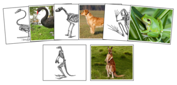 Animals And Their Skeletons