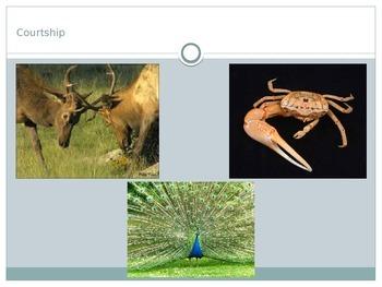 Animals - Animal Behaviors