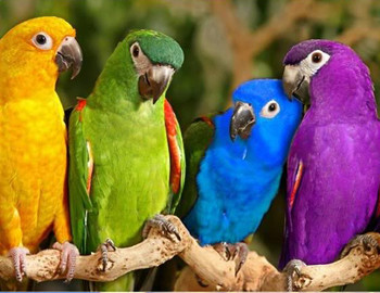 Animals: Animal Habitats, Adaptations, Classification - 360 Clipart Posters