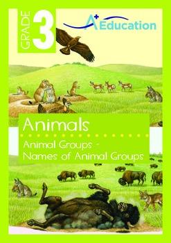 Animals - Animals Groups: Names of Animal Groups - Grade 3