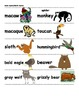 Animals Around the World - Word&Picture Cards