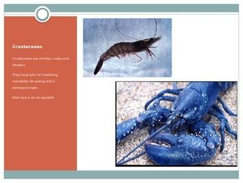Animals - Arthropods