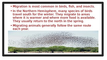 Animals Behavior: Migration Power Point