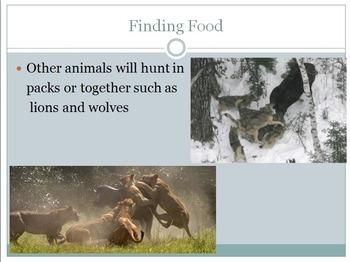 Animals Behavior Unit