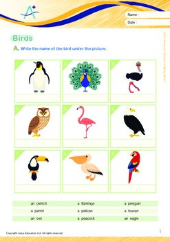 Animals - Birds (I): A Baby Bird - Grade 2