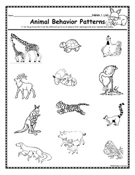 NGSS-1st Grade-LS1 & LS3: Animals: Body Parts, Physical Features and Behavior
