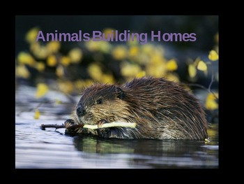 Animals Building Homes HMH Journeys 2nd Grade Powerpoint