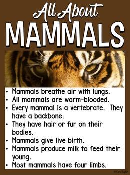 Animals Bundle