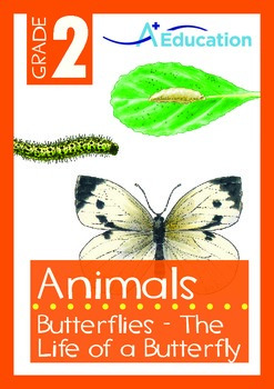 Animals - Butterflies: The Life of a Butterfly - Grade 2