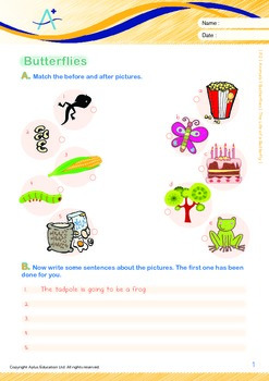 Animals - Butterflies: The Life of a Butterfly - Grade 2