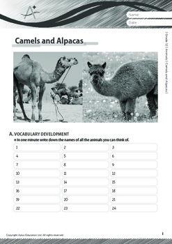 Animals - Camels and Alpacas - Grade 12