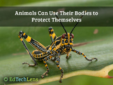 Animals Can Use Their Bodies to Protect Themselves PDF
