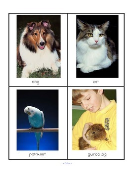 Animals Categorizing Sorting Center - Farm, African & Pets (photos) + Printables