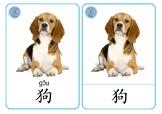 Animals Chinese Flashcards - 动物字卡