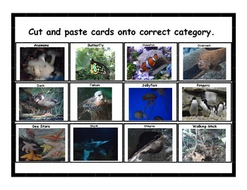 Classify & Categorize Animals (birds, fish, insects, invertebrates)