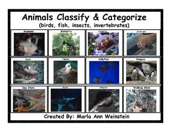 Classify & Categorize Animals (birds, fish, insects, inver