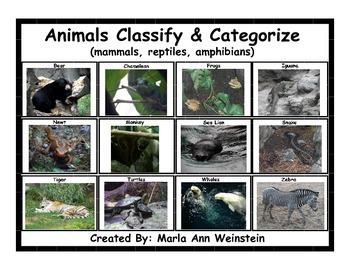 Classify & Categorize Animals (mammals, reptiles, amphibians)
