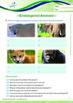 Animals - Endangered Animals: Why Are Animals Endangered - Grade 5