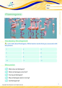 Animals - Flamingoes: Hello Flamingo - Grade 2