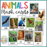 Animals Flash Cards with Real Pictures