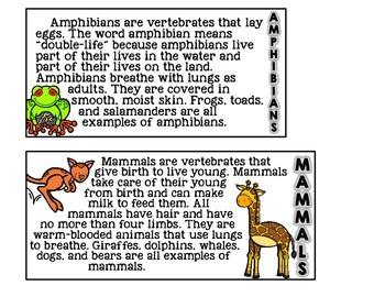 Animals Flip Book [a vertebrates reader]