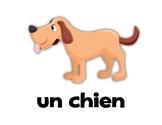 Animals! French Flashcards