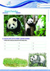 Animals - Giant Pandas - Grade 10