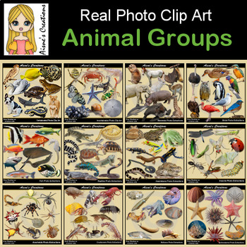 Animals Groups Real Photo Clip Art