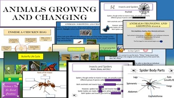 Interactive PPT.  and PDF Animals/ Insects Growing and Changing Egg to Adult