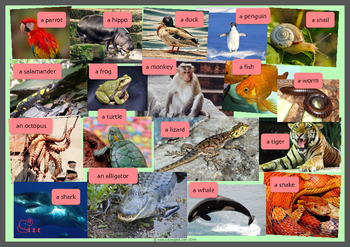 Animals Guessing Game (including FREE Audio recordings)
