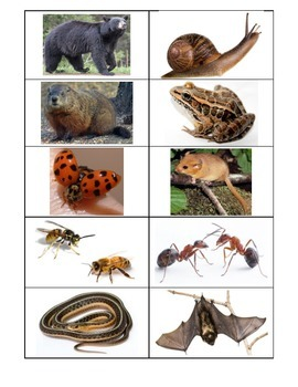 Animals Hibernation Sorting Cards