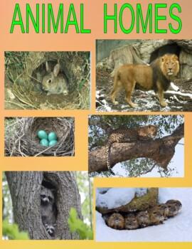 ANIMAL HOMES - Center /Station