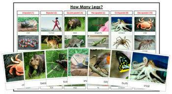 Animals: How Many Legs?