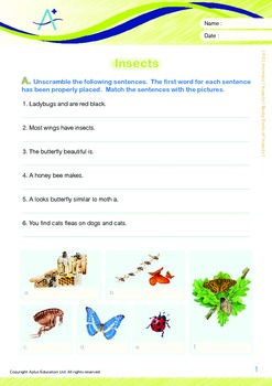 Animals - Insects (I): Body Parts of Insects - Grade 3