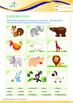Animals - Land Animals (II): Different Land Animals (II) - Grade 2