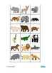 Animals Lotto Game Autism Special Education Turn Taking Social Skills