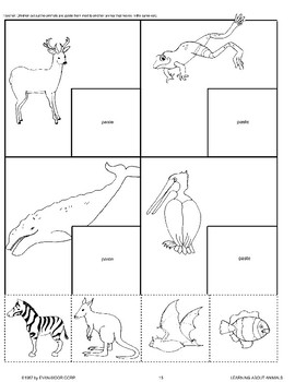 Animals Move in Different Ways