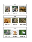 Animals Names - adults and babies