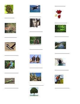 Animals/ Outdoors Graphic Organizer, Expresate Chapter 9 Vocab 1 Spanish 2