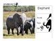 Animals Pack ( presentation + task sheets )