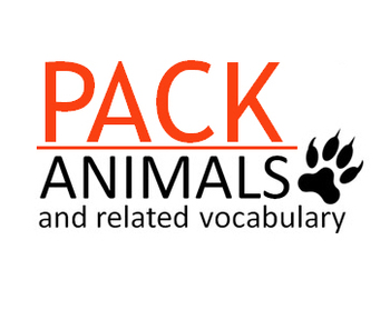 Animals Pack ( presentation + task sheets )