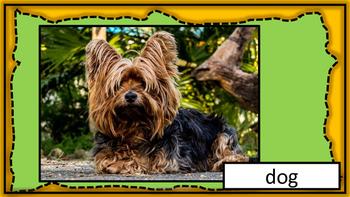 Animals - Pets Flashcards