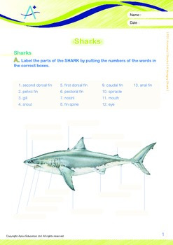 Animals - Sharks: A Hungry Shark - Grade 3