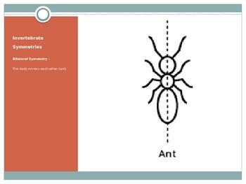 Animals - Simple Invertebrates