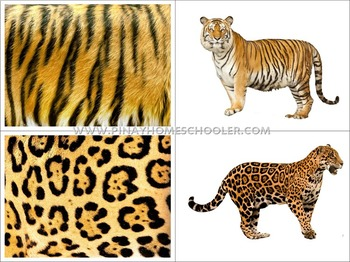 Animals Skin Covers Matching Cards